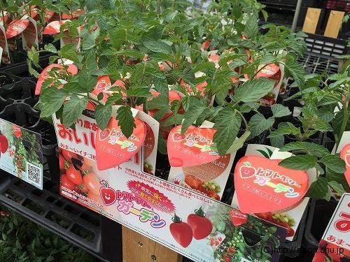 カインズのミニトマトの苗