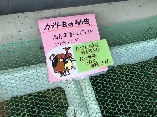 加藤牧場のカブトムシ幼虫プレゼント