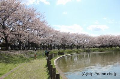 県民健康福祉村_桜