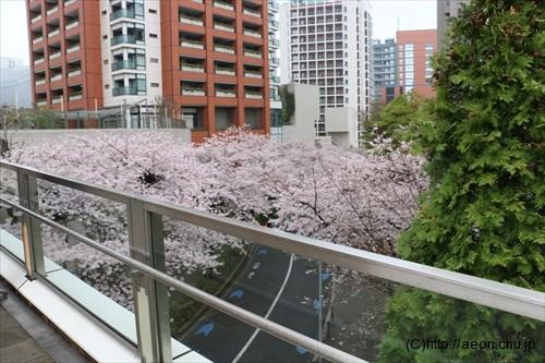 roppongi-hills-sakura_005