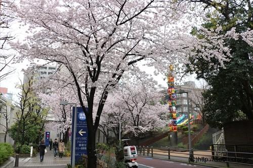 roppongi-hills-sakura_021