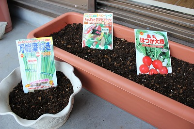 ベランダ菜園(ミニトマト・万能ねぎ・20日大根)を作ってみました