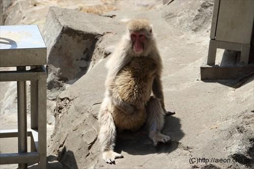 上野動物園 サル 親子・仔猿