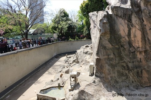 上野動物園サル山