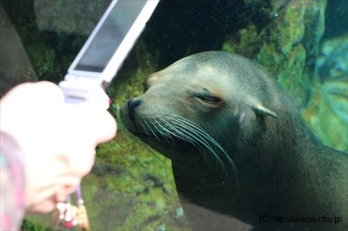 上野動物園アザラシはカメラ好き