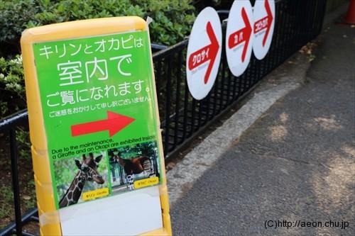 上野動物園 キリン・オカピは室内展示